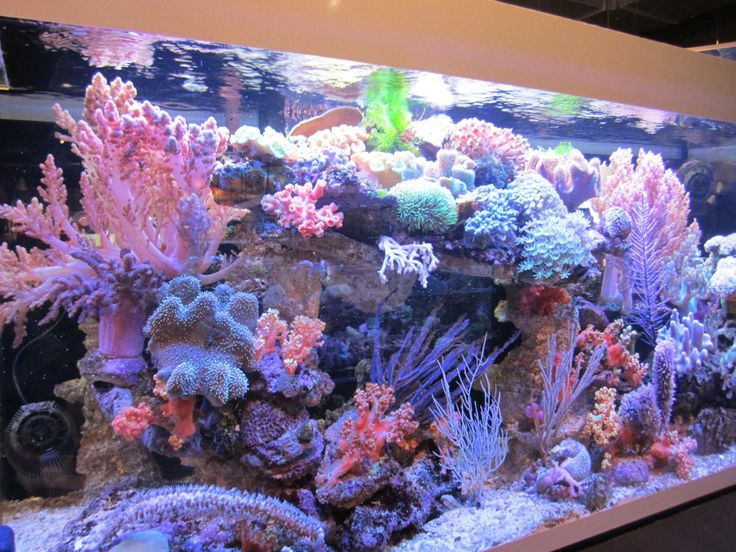 Beautiful Reef Aquarium powered by SICCE Voyager Stream pumps