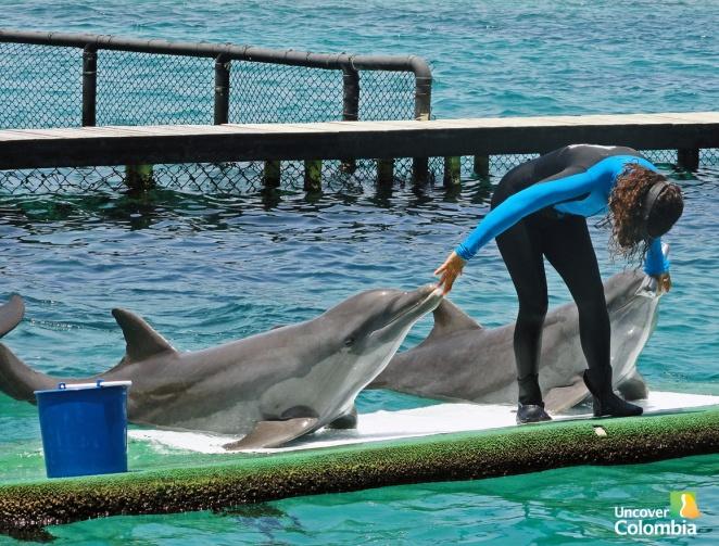 Aquarium in Islas del Rosario - Colombia