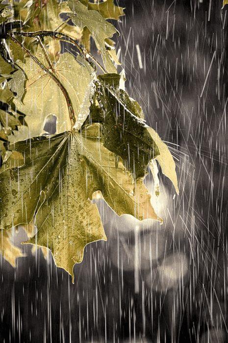 Raining through the leaves.