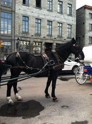 montreal_horse_carriage