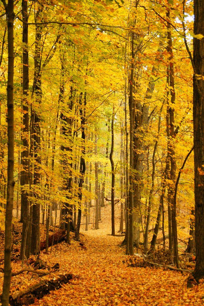 Sacred Forest, Poughkeepsie, NY