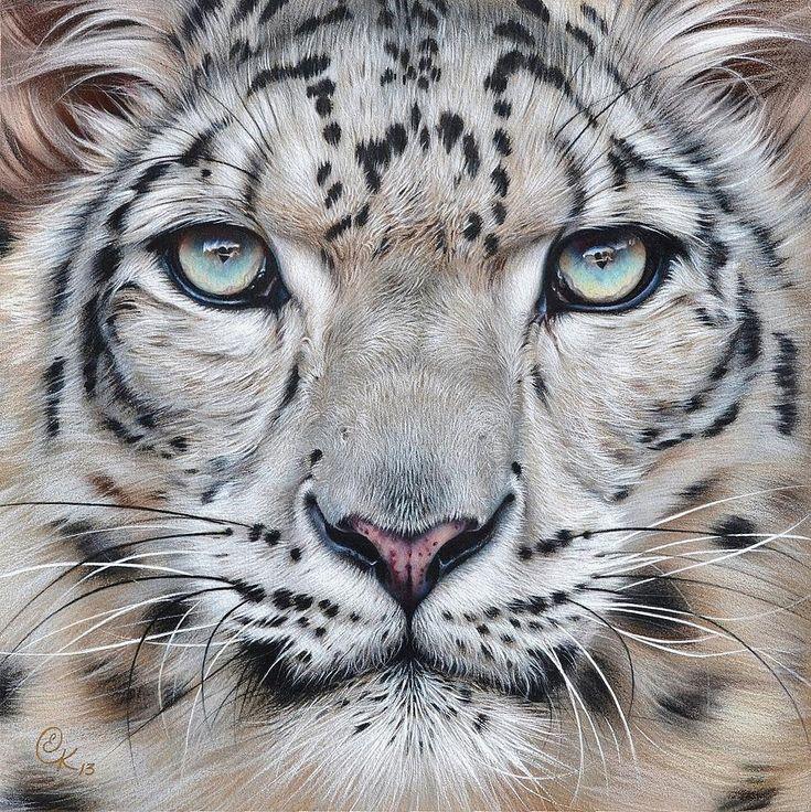 Faces of the Wild - Snow Leopard Print by Elena Kolotusha