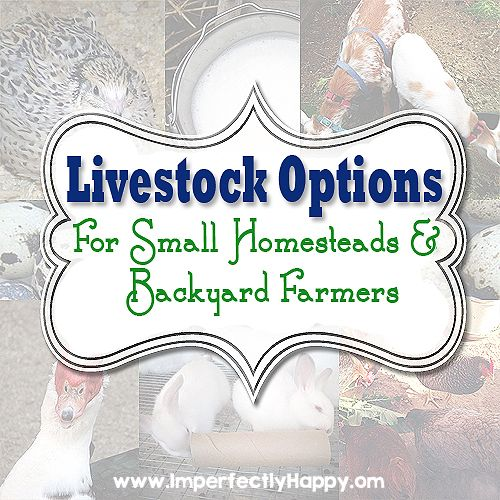 Livestock Options for Small Homesteads and Backyard Farms.| by ImperfectlyHappy.com