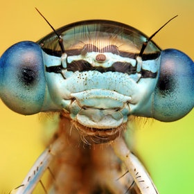Not often a close up of an insect can be called cute... But this guy is pretty cute!  Photo by Ondrej Pakan