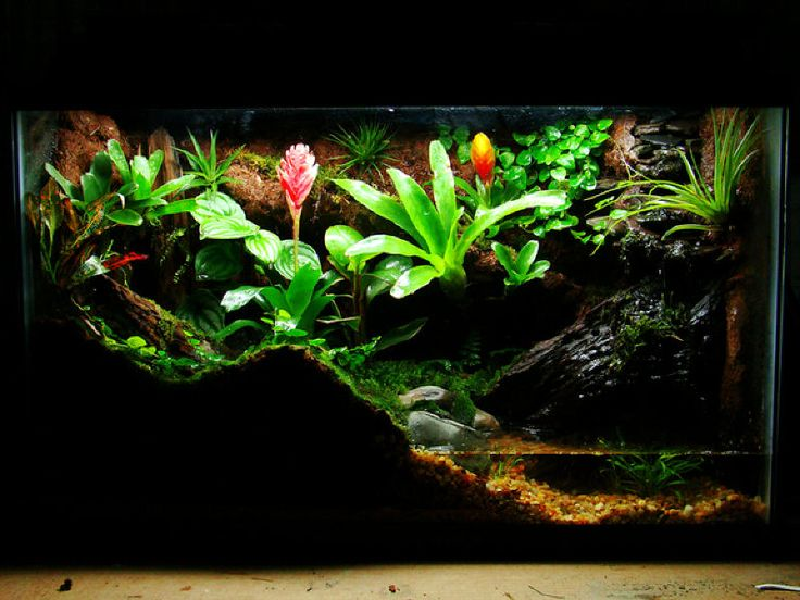 nice looking tropical terrarium, might do something like this for a croc skink one day
