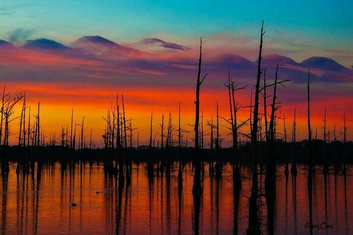 Monroe, Louisiana bayou