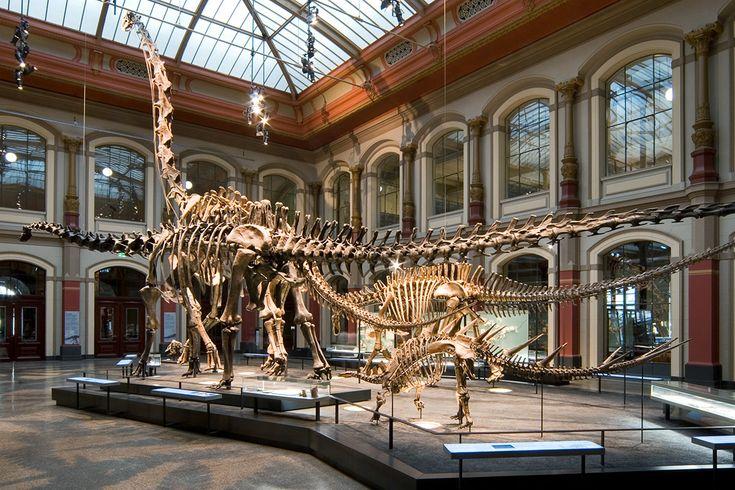 Kindersonntag - Dinosaurier erforschen   Naturkundemuseum Berlin