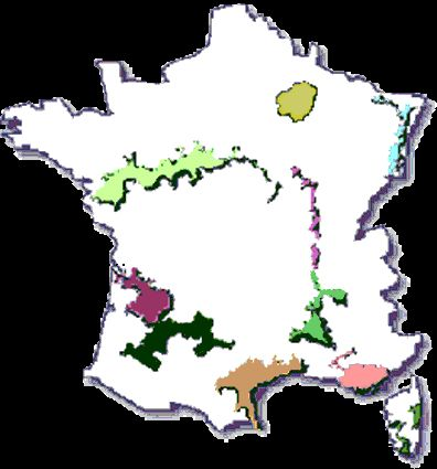French Wine Regions - May be able to combine my UK trip with a bit of wine tasting in France with Miss Ants...maybe