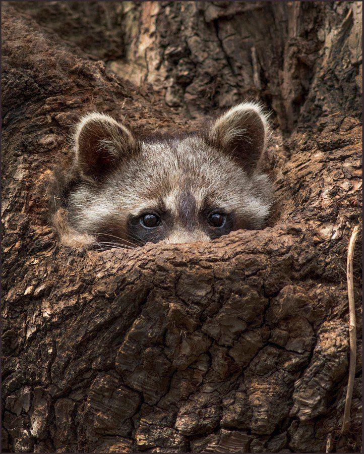 картинки животные прячутся меня профессиональная