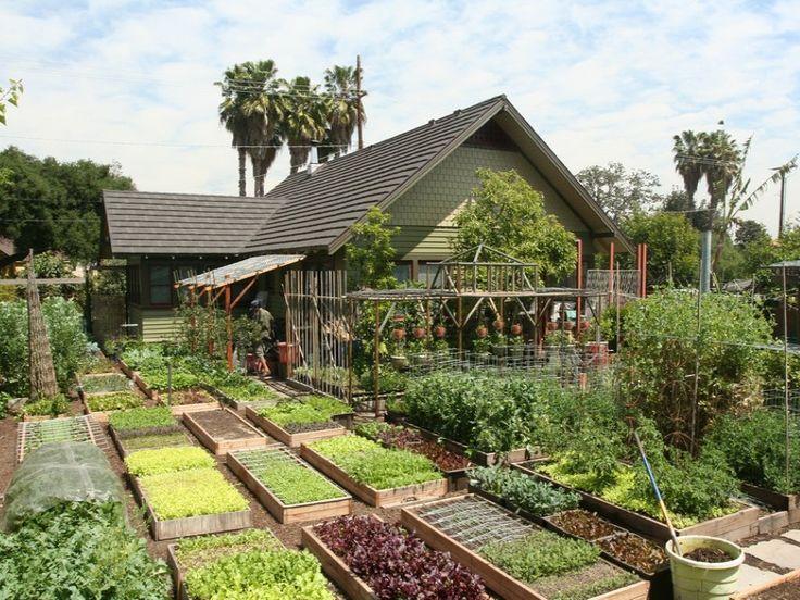 Vous pensiez ne pas pouvoir devenir auto-suffisant dans votre petit jardin urbain ? L'histoire de la famille Dervaes va vous faire changer d'avis. Dans leur jardin de 370 mètres carrés situé à Pasadena en Californie, cette famille américaine arrive à faire pousser 2,7 tonnes de nourriture bio par an ! Une véritable ferme urbaine à …