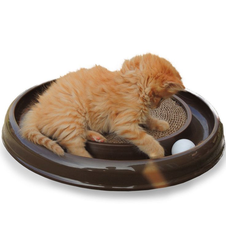 Cat Scratch Chaser-Cats-Cat Toy-Cat Scratcher-Cat Chaser-Kittens-Ball-Fun-Brown