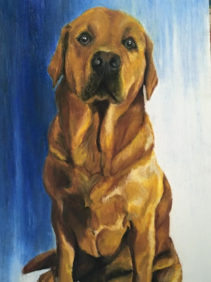 """Labrador Retriever """"ZECA"""" A2, made with oil pastels by Rita Marques Guedes"""