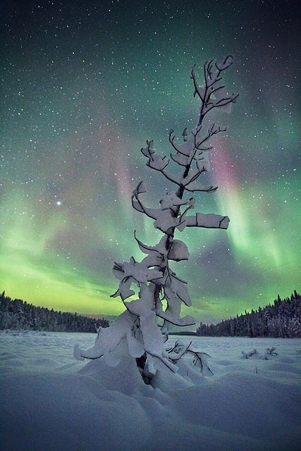Still Standing; Lapland, Finland. Idk why the word Finland is so hilarious to me right now.