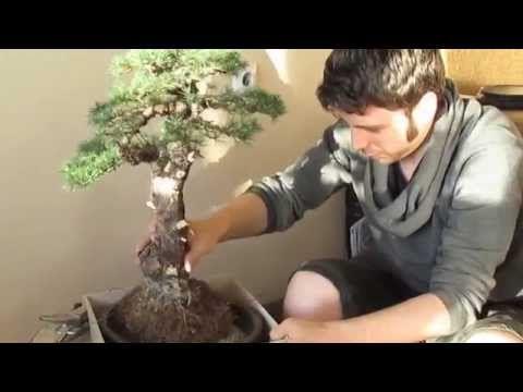 Ямадори - охота на бонсай - YouTube