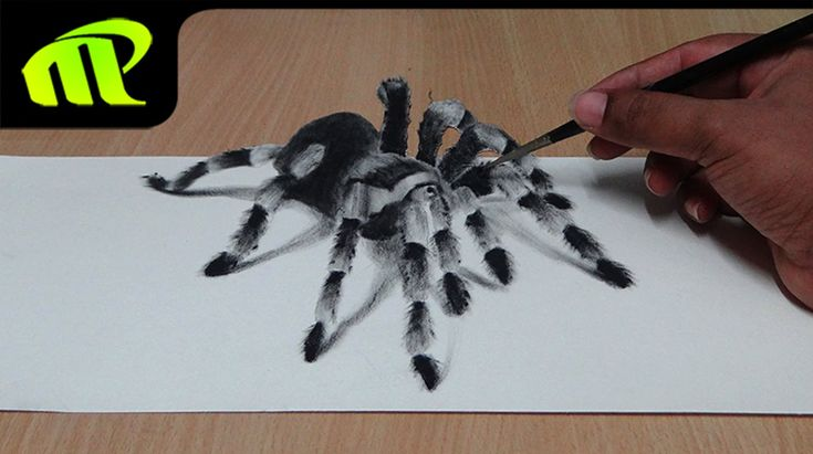 How to Draw 3D Spider - Anamorphic Illusion | Tarantula | Widow Spider Drawing | 3D Spider Drawing/AMAZING realistic illusion! Check out the full drawing pro...
