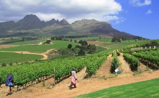 Ahhh Cape Town Winelands <3