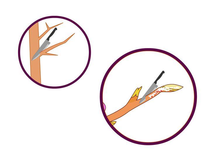 How to Prune Plum Trees -- via wikiHow.com