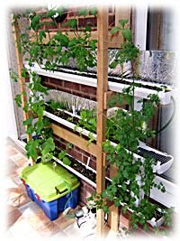 This guy made an awesome hydroponic system out of vinyl gutters. (Check out the video.) I'd love to try something like this!