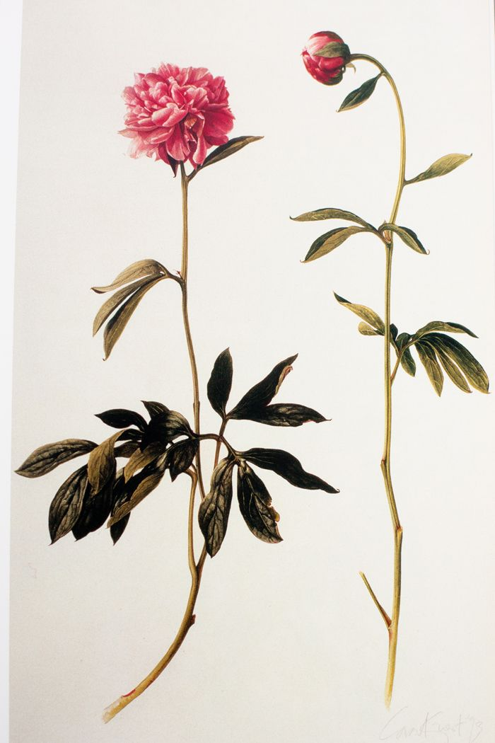 Treasures of Botanical Art: Icons from the Shirley Sherwood and Kew Collections by Shirley Sherwood and Martin Rix.