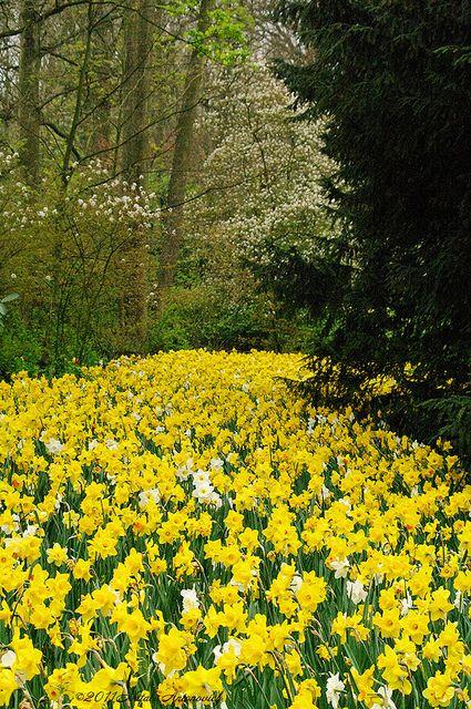 Keukenhof Gardens, The Netherlands. Photo: Natali Antonovich, via Flickr