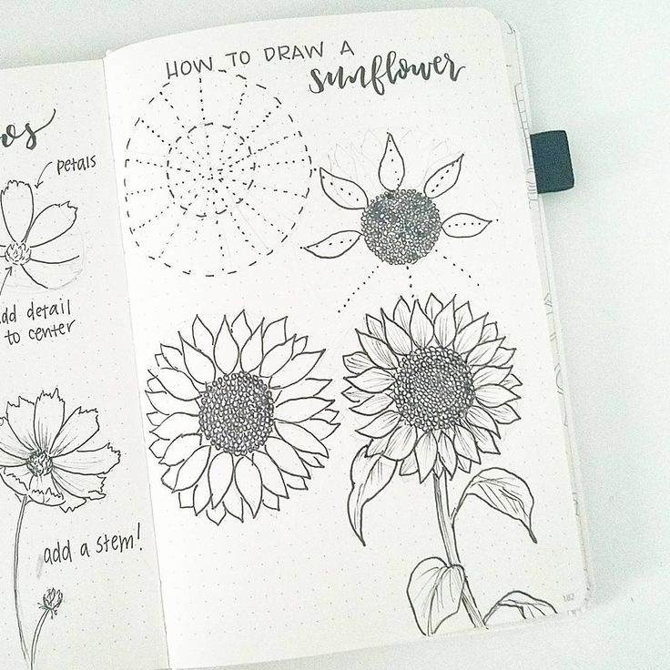 """2,896 Likes, 38 Comments - liz (@bonjournal_) on Instagram: """"Happy Friday! By request,  here are the steps to draw a sunflower.  To me, the hardest part is…"""""""
