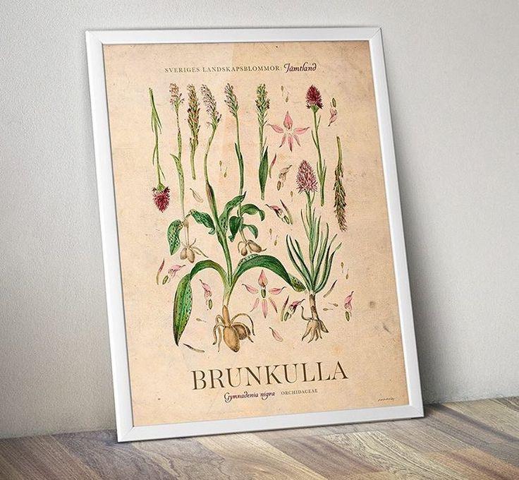 "Poster ""Brunkulla"" 40 x 50 cm"