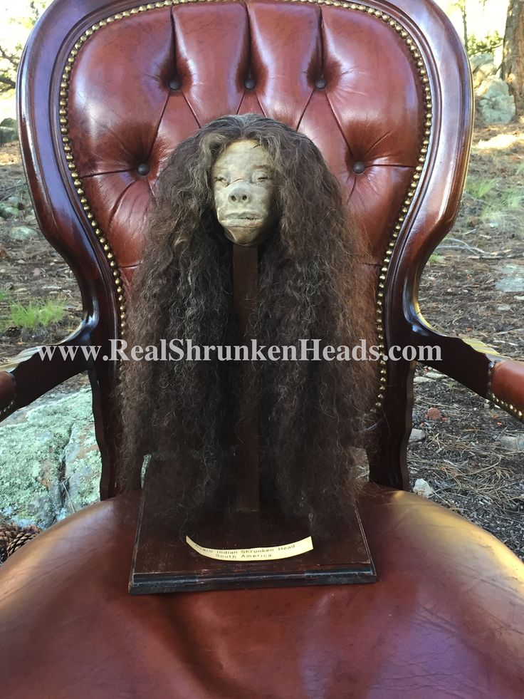 The Mansfield Museum Shrunken Head for Sale! Info@realshrunkenheads.com