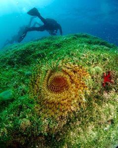 Centro Immersioni Diving in Elba   #CentroImmersioni #immersioni #ImmersioniSubacquee #ScubaDiving #scuba #diving  #GreenWhereabouts #elba #isoladelba  #DivingInElba @divinginelba