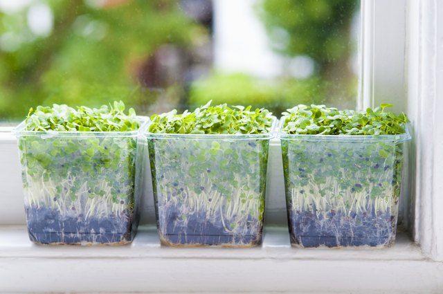 ada206ae9b21b57f9d050adaa63abd45 - Which Plastics Are Safe For Gardening