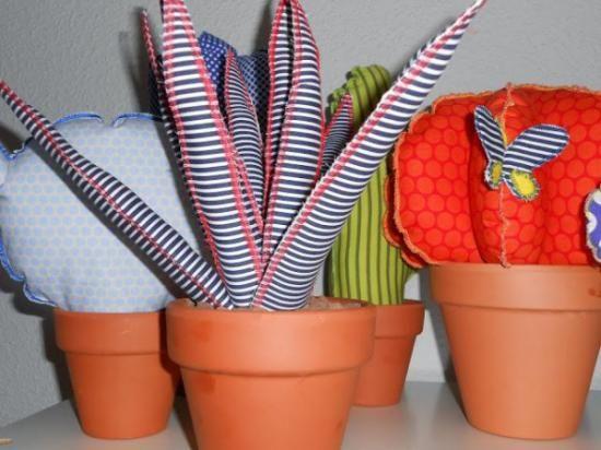 Cactus bola de tela y Aloes