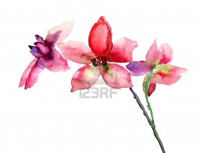 Pink Orchids Flowers, Watercolor Illustration Royalty Free Stock Photo, Pictures, Images And Stock Photography. Image 18062666.