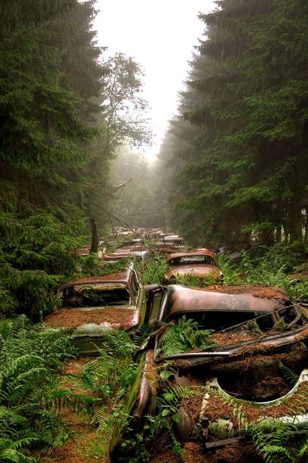 Surreal Photos of 70-Year-Old Traffic Jam in A Forgotten Forest   So Bad So Good