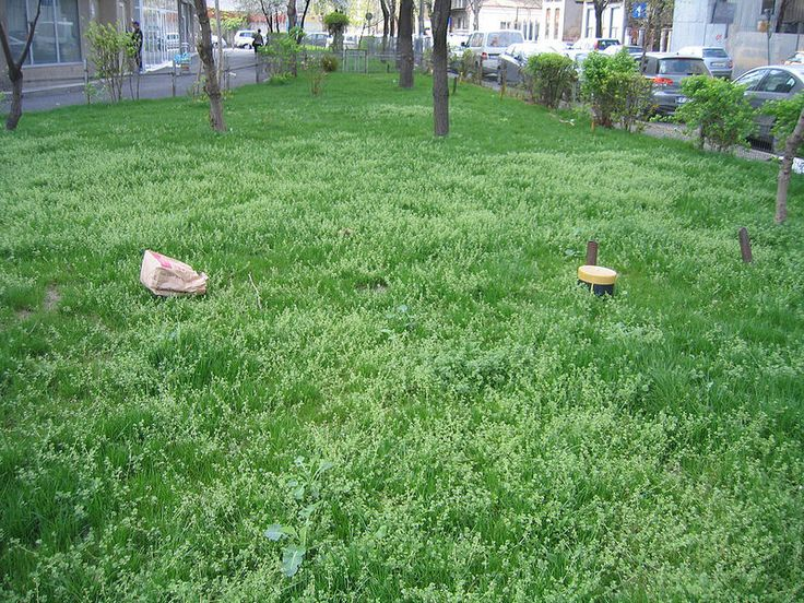 Green grass and paper bag