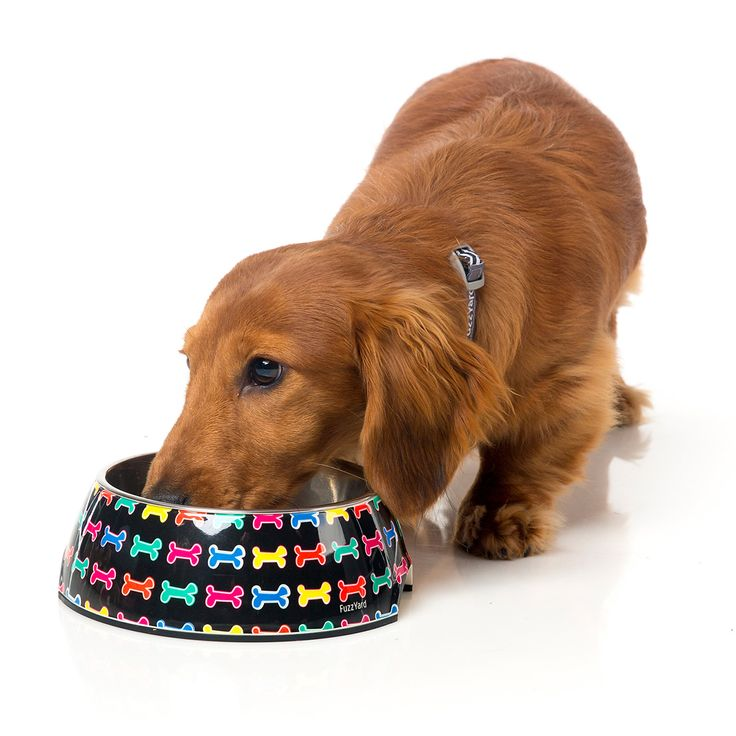 FuzzYard Jelly Bones Easy Feeder Pet Bowl