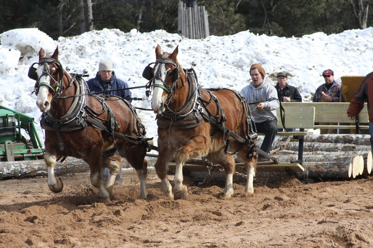 Klondike Days, Winter Festival. March 3rd and 4th 2012. Dog weight pull, lumberjack competition, chain-saw carving, art show, ect.