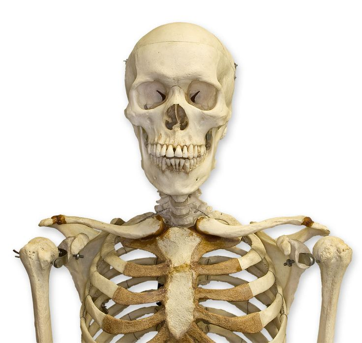 Google Image Result for http://www.skullsunlimited.com/userfiles/image/category3_family_236_large.jpg