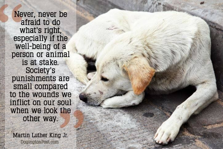 Never, never be afraid to do what's right, especially if the well-being of a person or animal is at stake. Society's punishment are small compared to the wounds we inflict on our soul when we look the other way!!!