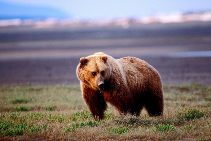 The last wild west: Alaska's Denali National Park - Lonely Planet