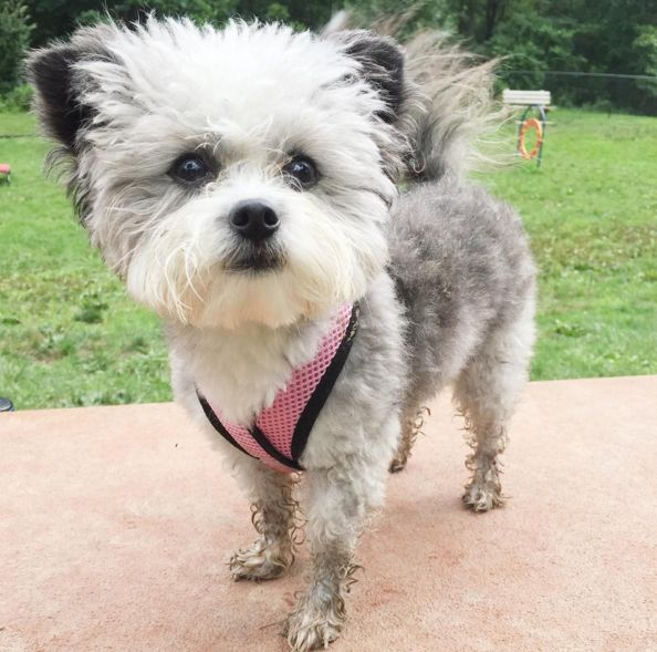 The fluffiest pup at Huntington Pet Safe Dog Park at Ritter Park - Huntington, WV - Angus Off-Leash #dogs #puppies #cutedogs #dogparks #huntington #westvirginia #angusoffleash