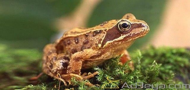 تفسير رؤية الضفدع في المنام أو الحلم بالتفصيل الخوف من الضفدع الضفدع الضفدع الأخضر الضفدع المطبوخ بالمنام Frog Animals