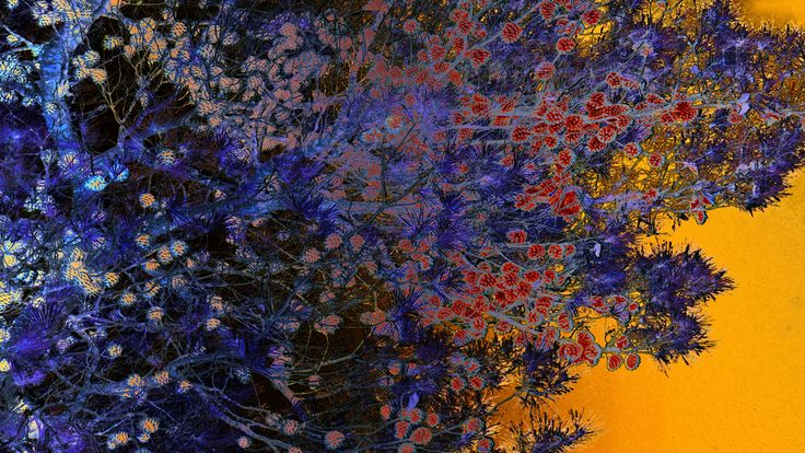 Pinetree ~ Van Lieshout VI | #digital #art #photography #yellow #blue #tree #kunst #japan #boom