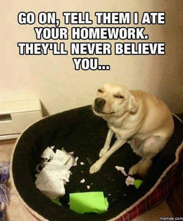 Go on tell them - dog meme - http://www.jokideo.com/