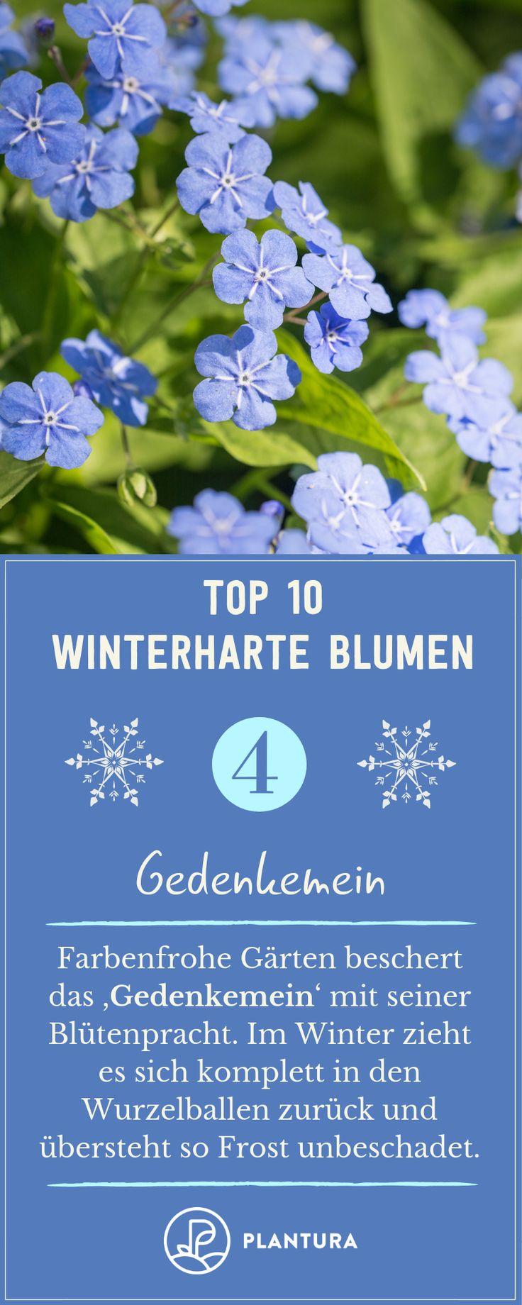 Winterharte Blumen: Die robusten Top 10 für Ihren Garten – Plantura | Garten Ideen & Tipps | Gemüse, Obst, Kräuter