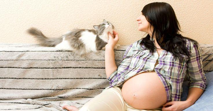 O gato deve entrar no quarto do bebê? A grávida pode higienizar a caixa de areia do felino? Qual é o risco real de contrair a toxoplasmose? Como apresentar seu animal de estimação ao recém-nascido? Essas e outras dúvidas respondidas por especialistas, confira