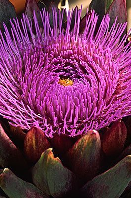 ~~Artichokes 1222 .. By Andy Small~~