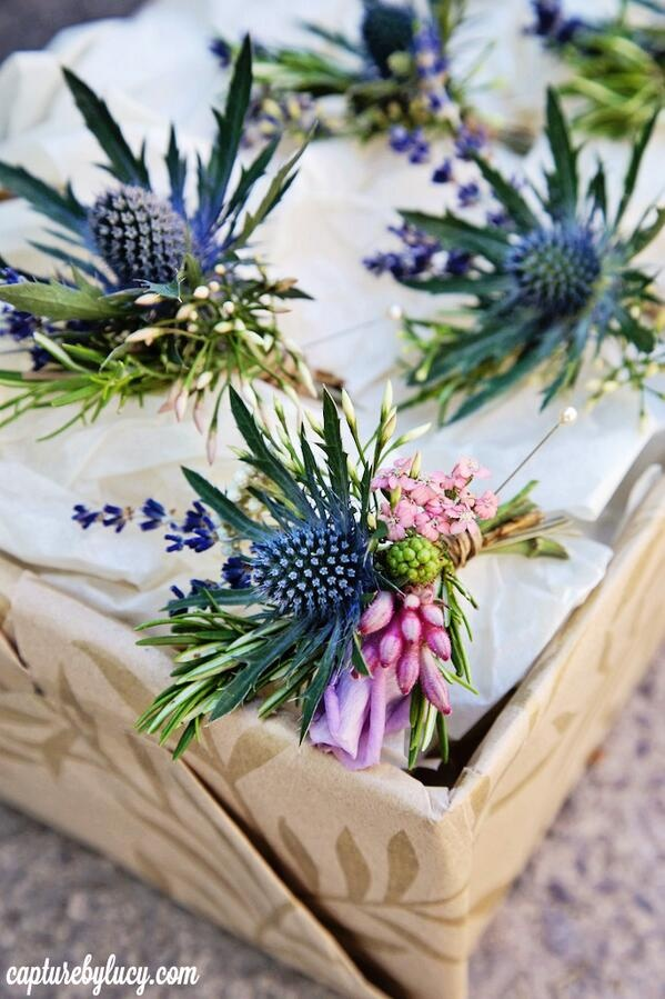 Thistle buttonholes Daisy Lane Floral Design