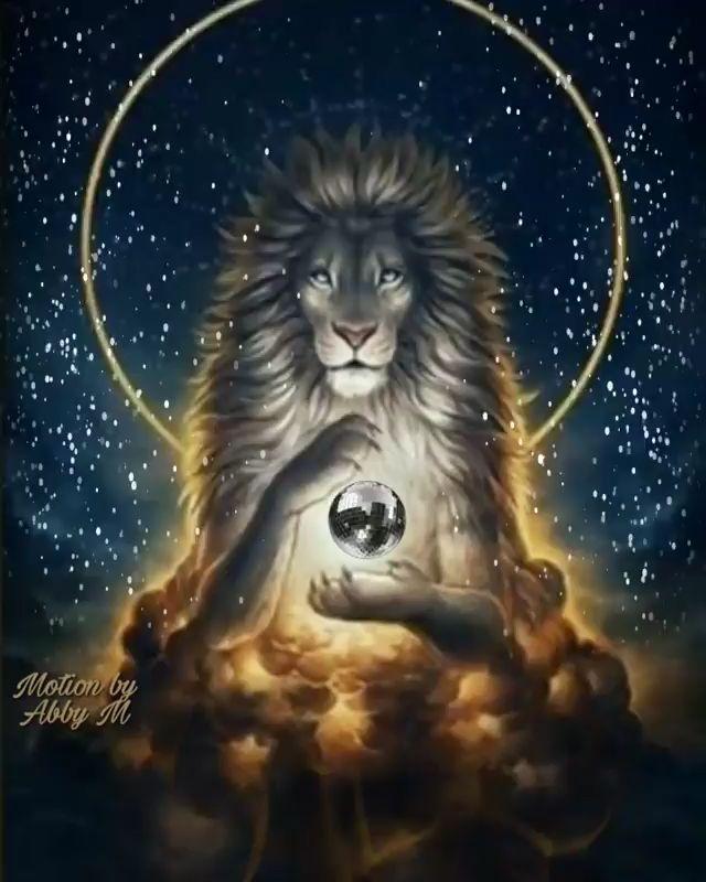 Pin de ✿⊱╮N8v MoRnIngStar ╭⊰✿ en LIONS [Video] | Imagenes de animales kawaii, Imagenes de animales, Fotos de animales salvajes