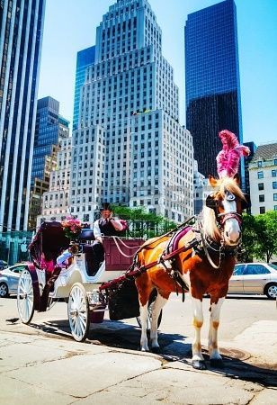 NYC - Horse-drawn carriage rides through Central Park are one of the most picturesque and romantic ways to see the Central Park.