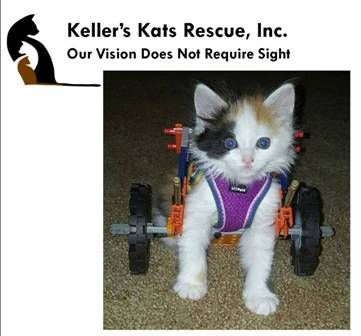 Please vote for Rochester's local animal rescue Keller's Kats for National Animal Shelter Appreciation Week Contest!  This is where we adopted our little Daria from <3