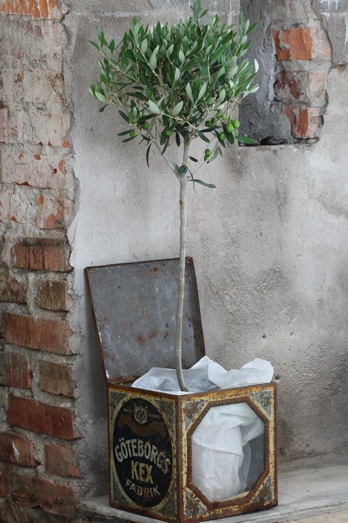 Olive Tree Living Room Whitewashed Cottage chippy shabby chic french country rus